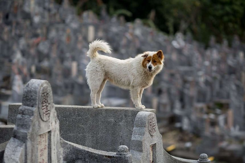 The new legislation outlaws the consumption, purchase or possession of dog and cat meat.