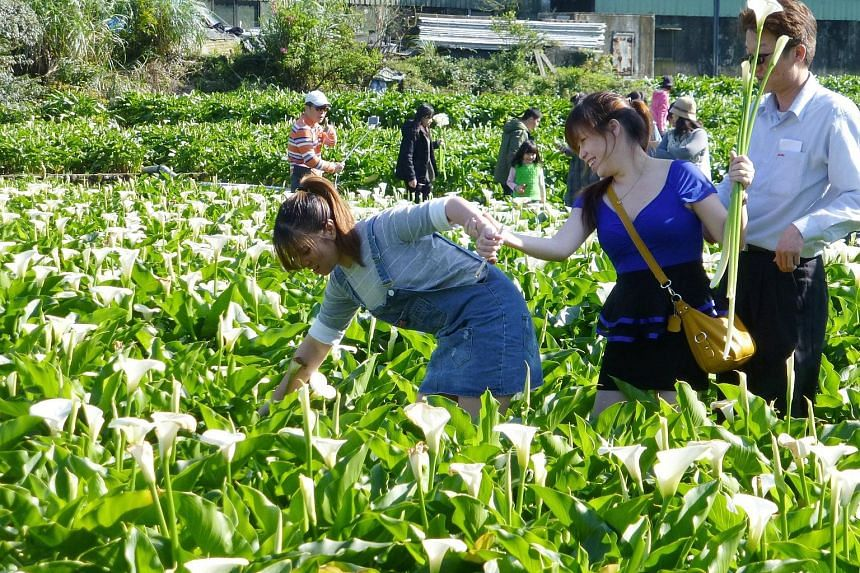 Visitors at Taipei's Calla Lily Festival on April 3. Taiwan will grant easier access to more Asean and South Asian tourists.