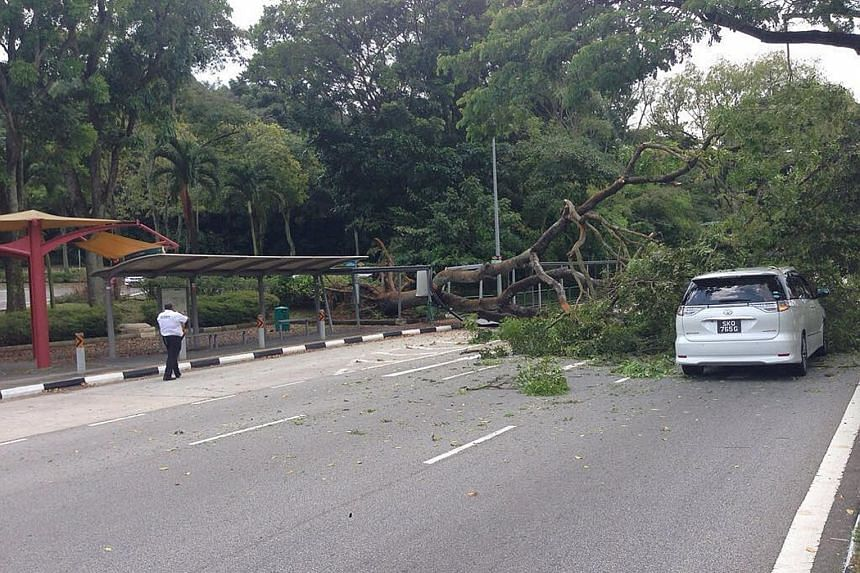 A 17m-tall tree fell in Upper Jurong Road on Saturday, blocking traffic in one direction for about three hours and damaging a covered walkway. The Straits Times understands that no one was injured. A spokesman for the nearby Singapore Discovery Centr