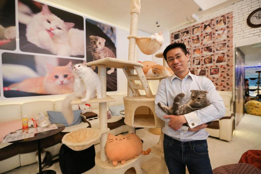 Mr Jonathan Tan was the owner of the now-defunct Cuddles Cat Cafe at *Scape in Orchard Road.