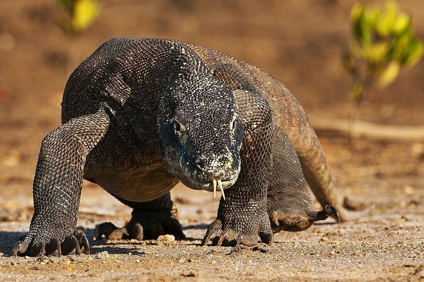 Scientists in the US have isolated a substance in the blood of a Komodo dragon that may be able to kill germs.