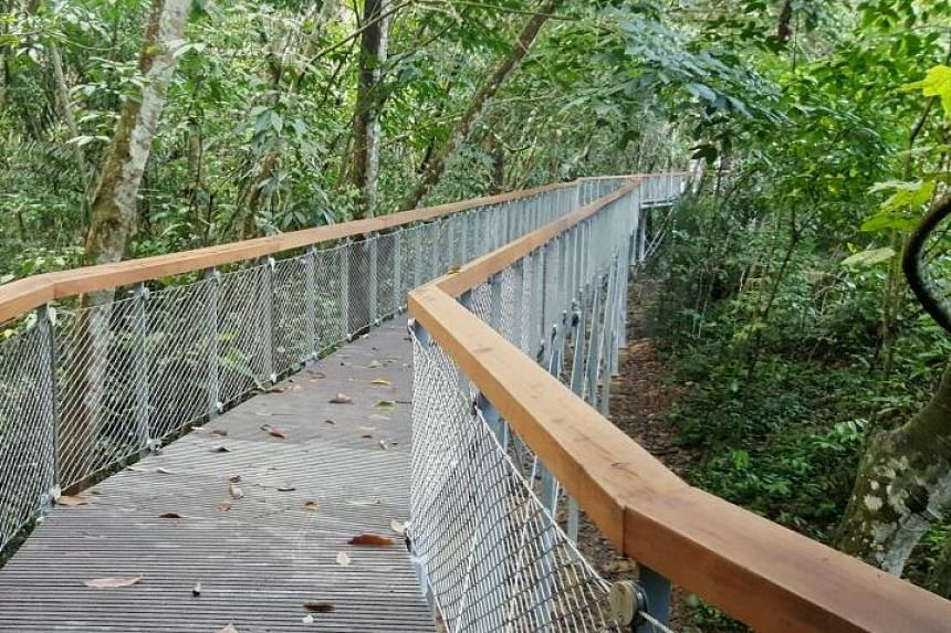 Visitors can explore the Drongo Trail, which features a sub-canopy walk.
