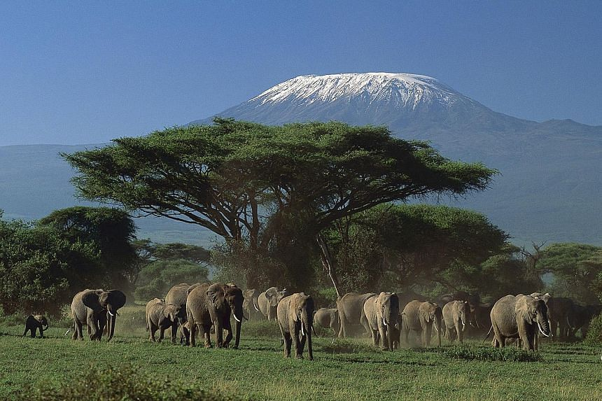 Get up close to wildlife at Amboseli National Park in Nairobi, Africa.