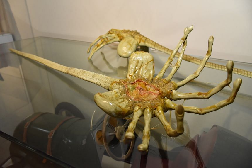A model of the facehugger, the second stage of development of the alien from the movies.