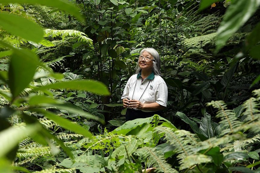 Dr Lena Chan at the Botanic Gardens. With her at the helm, the National Biodiversity Centre has become the nerve centre for coordinating nationwide conservation efforts, such as the planting of trees that provide a multi-layered canopy of leaves simi
