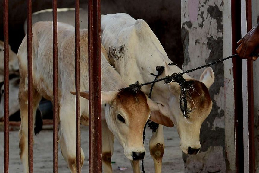 The incident comes amid a wave of rising tensions over the killing and smuggling of cows in Hindu-majority India, where the animal is considered sacred.