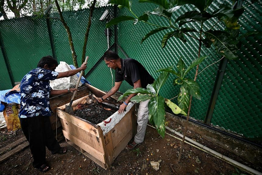 Mr Mohan and Mr Anba working on food waste in the compost bin. Black soldier flies help to decompose the waste, turning it into fertiliser for use in the eco-garden. Mr Mohan said there was satisfaction in seeing the plants grow.
