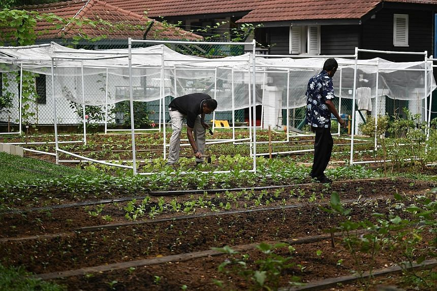 """From left: Former residents Anba and Mohan working in the eco-garden at the HEB-Ashram Halfway House. They were released from the home earlier this year but returned to volunteer their services. Mr Anba said working in the garden """"brought us closer t"""