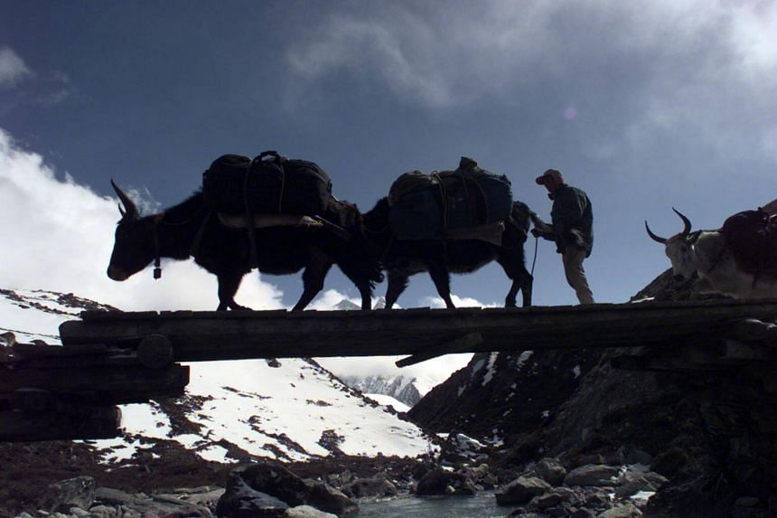 Nepal has reversed a controversial decision made last year to stop issuing summit certificates to Sherpa guides.