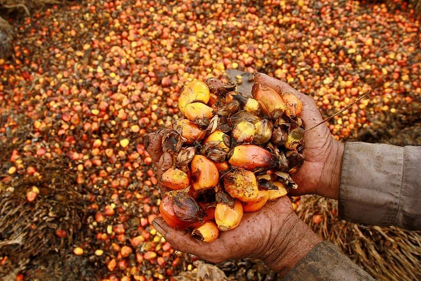 Oil palm fruits at a plantation in Indonesia. The recovery in prices of some of Indonesia's main commodities, such as palm oil and coal, helped economic growth pick up to 5.02 per cent last year, from 4.79 per cent in 2015.