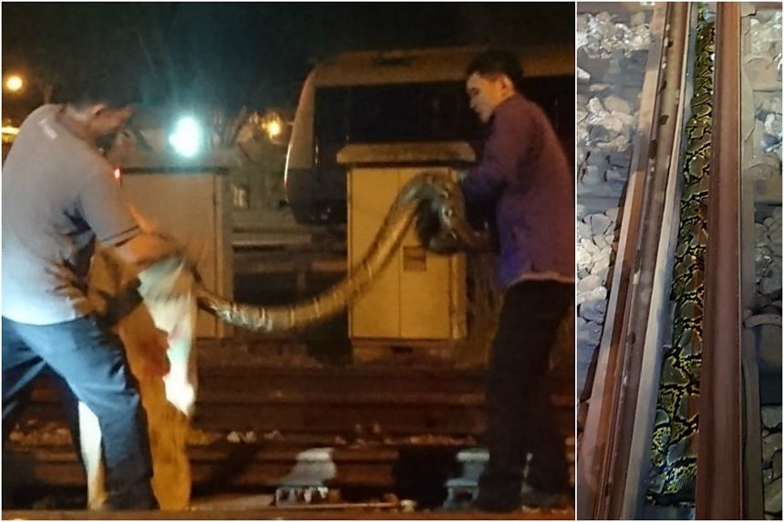 The snake, believed to be a reticulated python, was found at the Ulu Pandan depot.