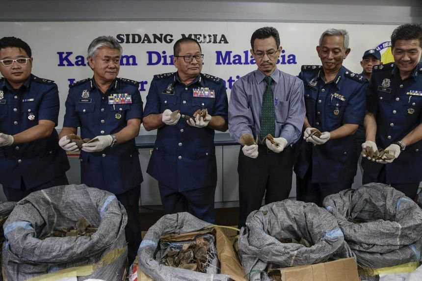 Royal Malaysian Customs (RMC) department assistant director general, Datuk Paddy Abdul Halim (centre) shows pangolin scales recently seized at Kuala Lumpur International Airport (KLIA), during a press conference in Sepang, Malaysia, on May 8, 2017.