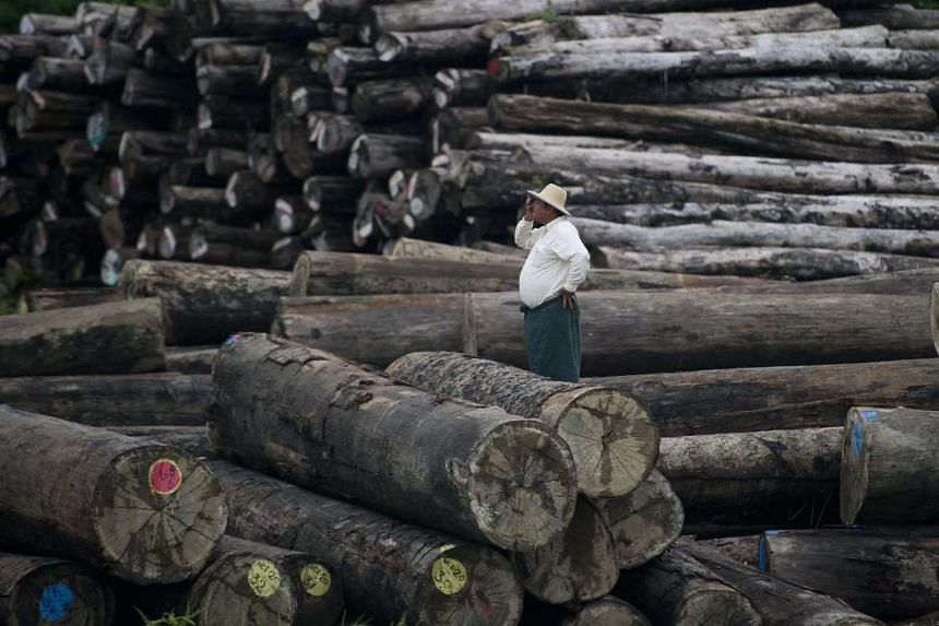 A worker looking on amid a pile of logs.
