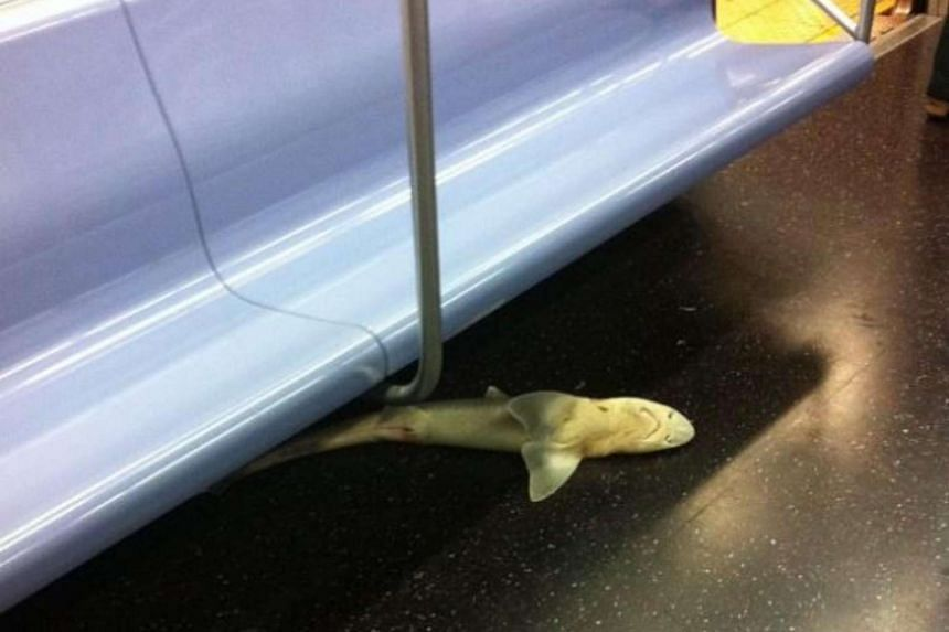 A small shark found on a New York subway train in 2013.