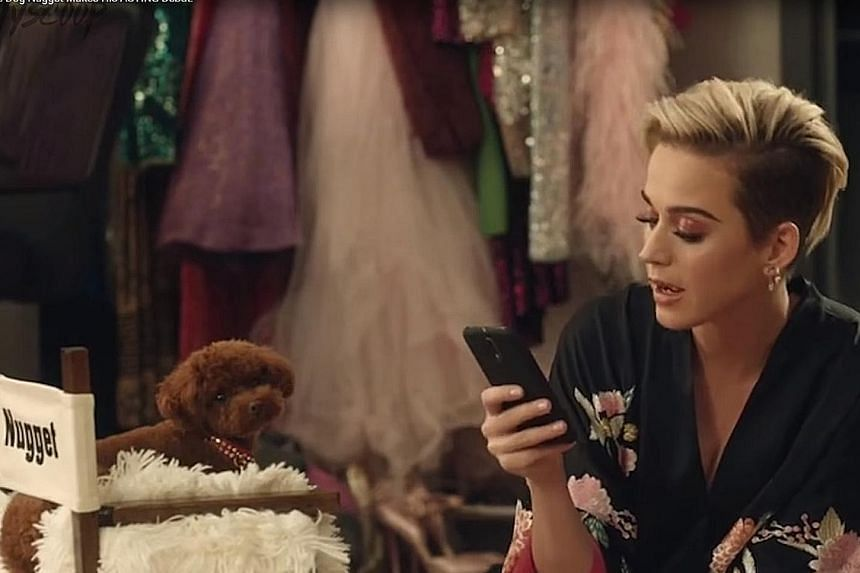 Katy Perrys Dog Lands Ad Entertainment News Top Stories The