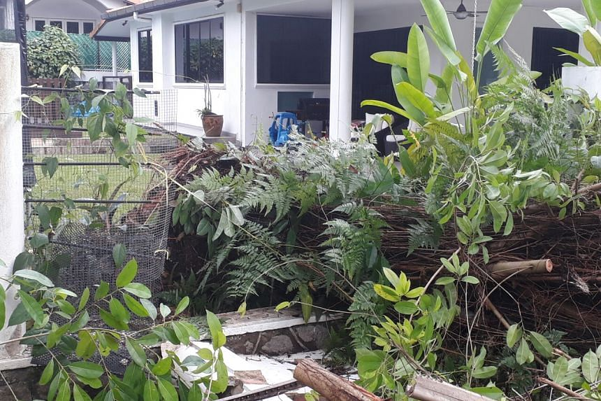 A tree fell at Grove Drive, damaging the wall of a house on May 11, 2017.