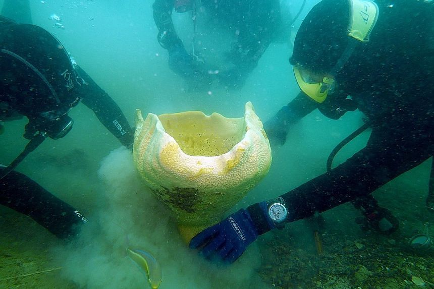 NParks researchers working with a Nature Society (Singapore) volunteer to dig out a neptune's cup sponge, once thought to be globally extinct, in the waters off St John's Island for relocation last year. The leader of that team was Dr Karenne Tun, se