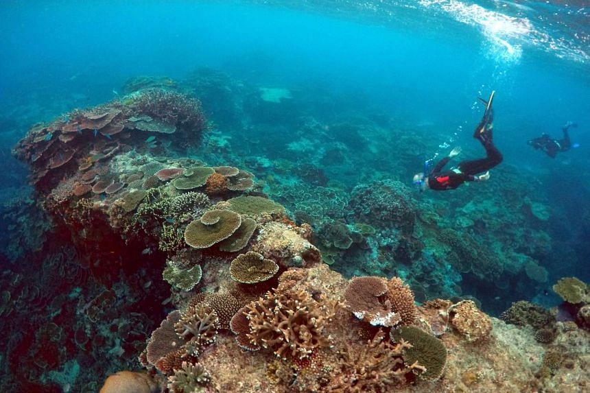 Diplomats from dozens of countries will be visiting the part of the Great Barrier Reef in Queensland (pictured) as part of a push to drum up support for the region as well as to be informed about conservation efforts by the state government.