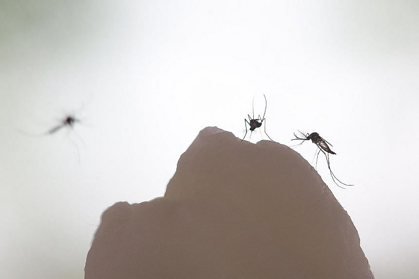 If the impact of climate change on mosquitoes and the diseases they carry were predictable, anticipating what comes next might be simple. But it is not, and therein lies the danger.