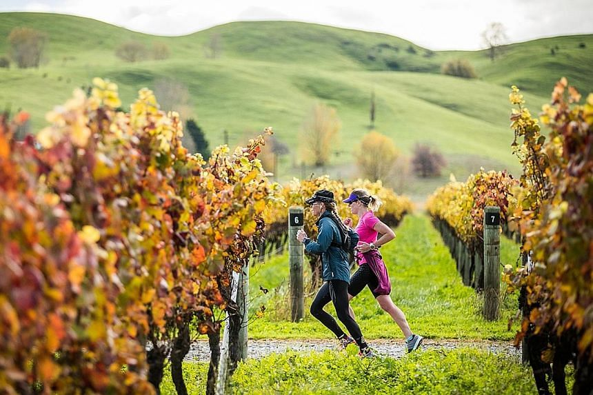 Participants running through a vineyard during the Hawke's Bay Marathon in New Zealand. Yesterday's event ended at the Sileni Estates Winery, where a food and wine festival celebrated the completion of the race.