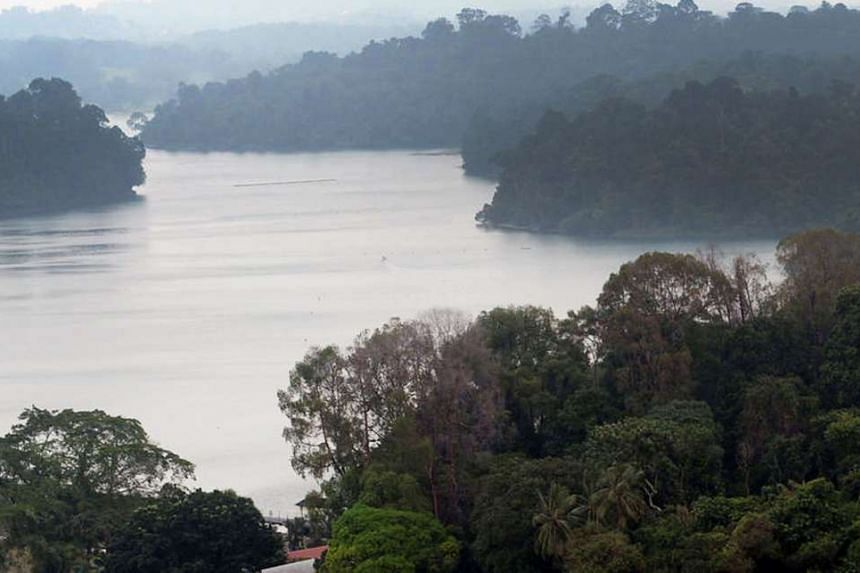 A view of MacRitchie Reservoir.