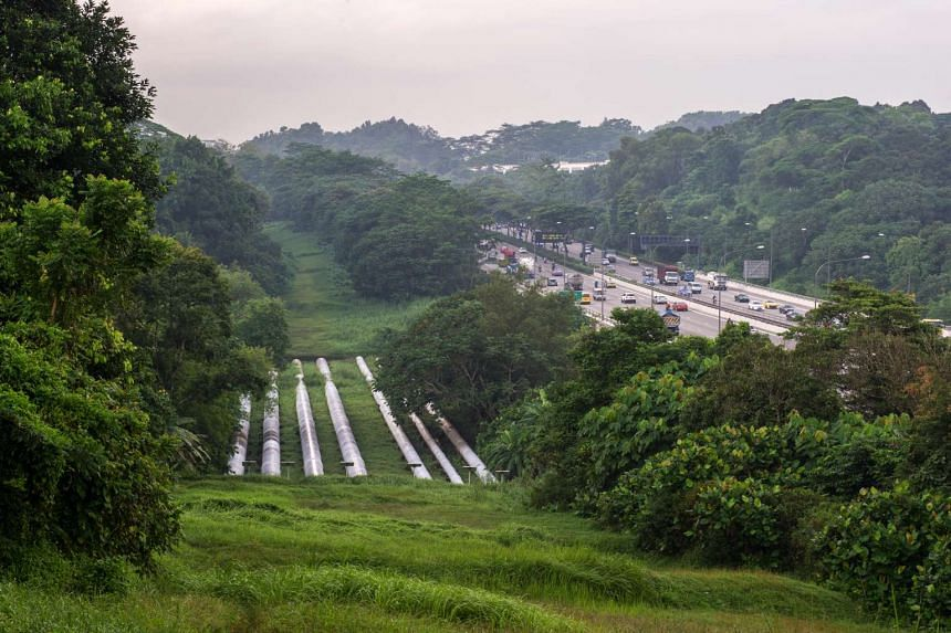Water pipes are seen beside the Bukit Timah Expressway (BKE).