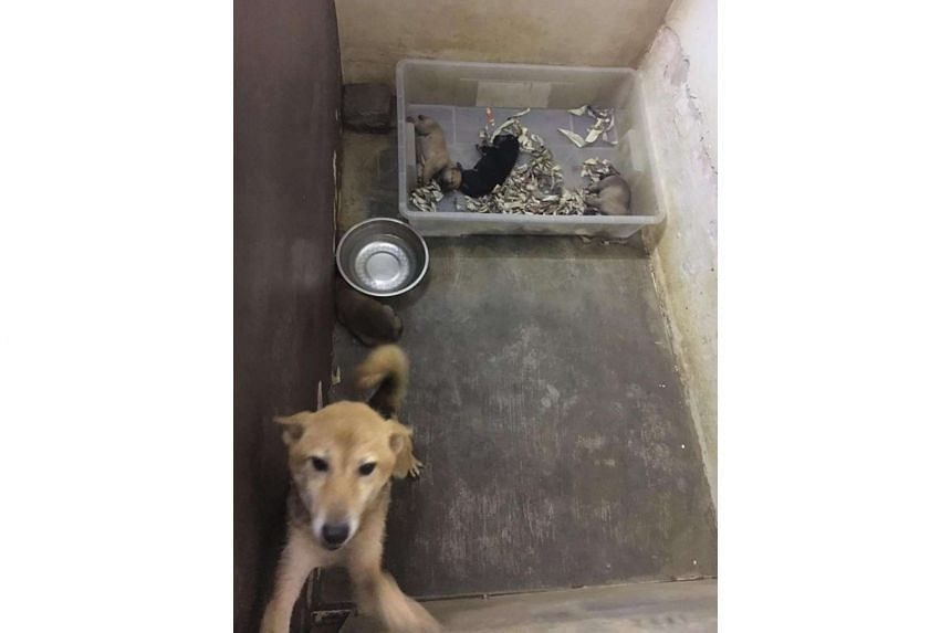 The dogs were discovered after a routine unannounced inspection at the pet shop, said the AVA.