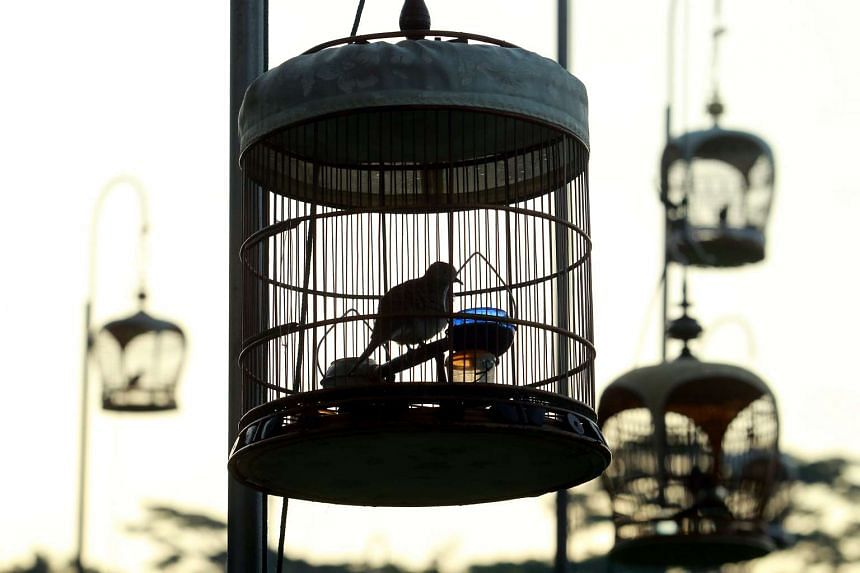 A 32-year-old man was arrested for breaking into a shop and stealing four birds.