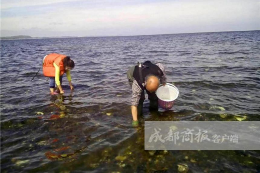 Sichuan-native Bian Miao Miao, her family and friends collecting oysters on a Danish beach.