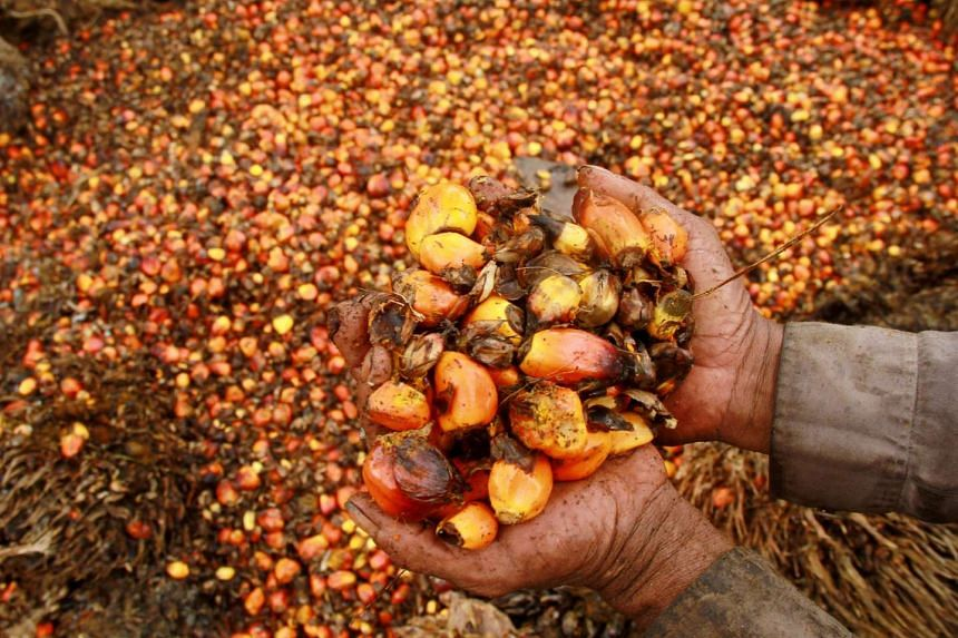 Oil palm fruit in a plantation in Indonesia. The Republic  is well-placed to take advantage of rising demand for  agricultural products in the region.
