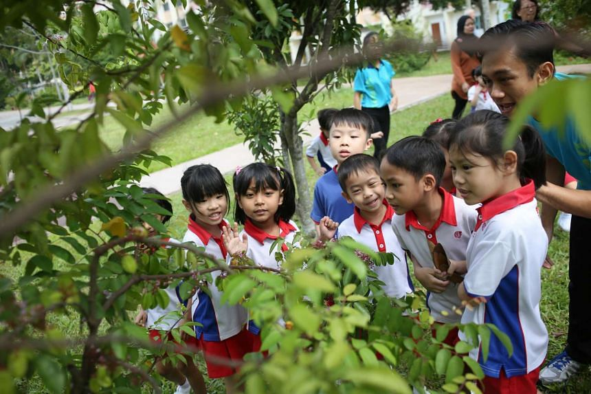 Children from a PCF Sparkletots Preschool at Tampines Central Block 858 explore the park next to their school.