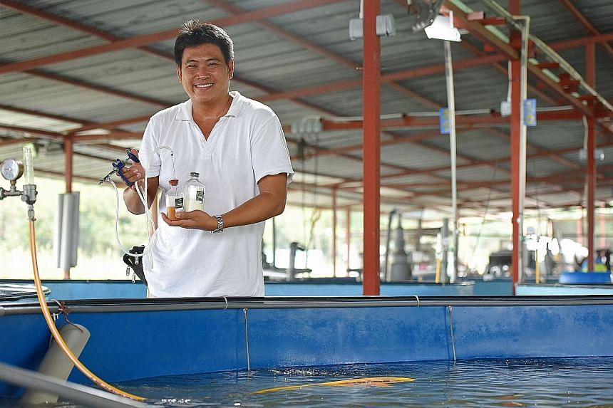 Marine Life Aquaculture managing director Frank Tan holding a vaccine injection gun used on the fish (left). He said a vaccination pilot the fish farm started four years ago has been successful - 90 per cent of vaccinated fish survived, compared with