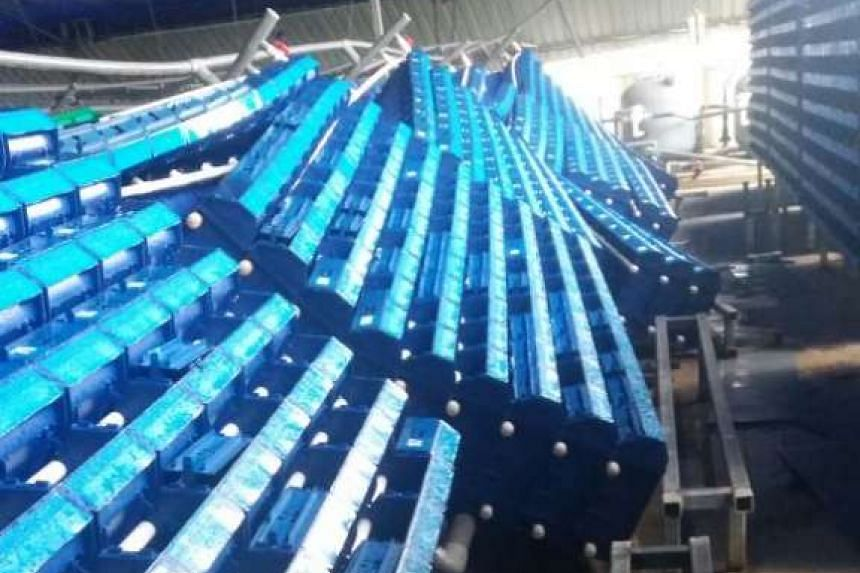 A vertical crab farm at Kranji lost about 100kg worth of crabs after strong gusts of wind blew down 19 of the 20 vertical structures housing the crustaceans on Friday (May 26) morning.