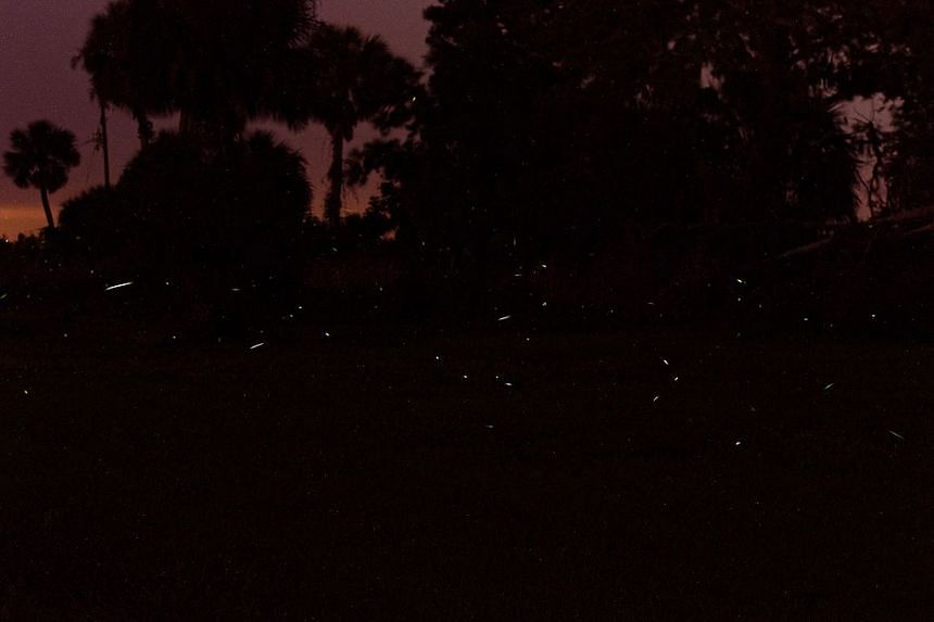 """Fireflies in Central Georgia, the United States, can be seen whizzing about a forest. A park in Wuhan, China, will cease its practise of releasing fireflies during a firefly """"festival"""" due ecological considerations. It will instead use lasers to crea"""