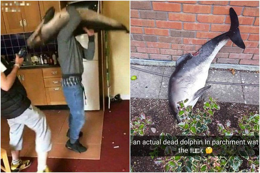 The two men were caught on camera messing around with the dolphin's carcass before throwing it out of a window.