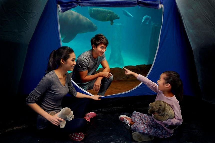 Sleep next to the manatees at the River Safari's RiverBed and Breakfast camp.