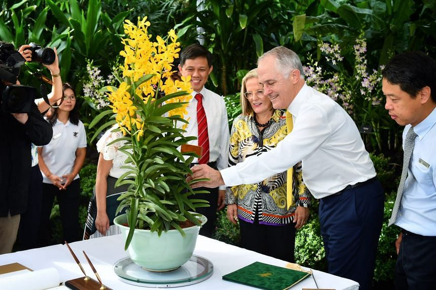Australian Prime Minister Malcolm Turnbull and his wife Mrs Lucy Turnbull, had an orchid named after them at National Orchid Garden on June 2, 2017.