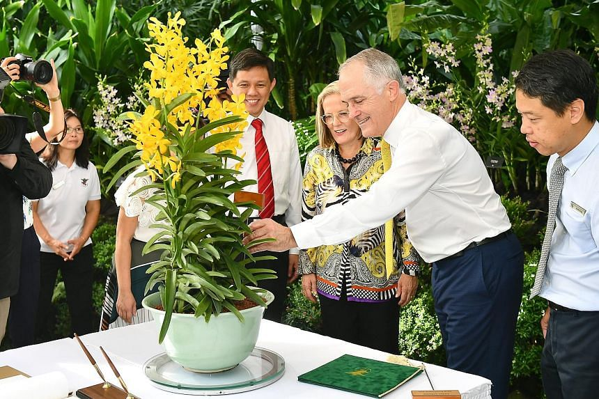 Australian Prime Minister Malcolm Turnbull and his wife Lucy had an orchid named after them at National Orchid Garden yesterday. The Aranda Malcolm and Lucy Turnbull is a hybrid of Arachnis hookeriana x Vanda Rockhampton Gold. With the Turnbulls were