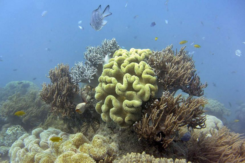 This file photo taken shows fish swimming past coral on Australia's Great Barrier Reef on Sept 22, 2014.