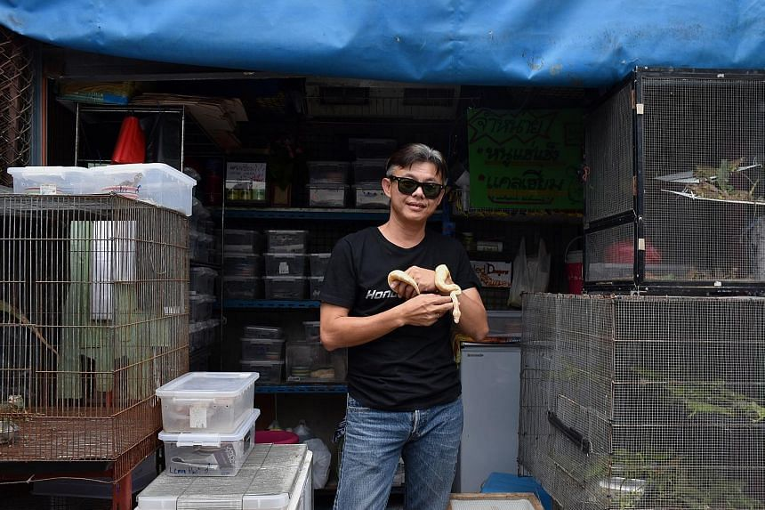 """Mr Wasan Limsakul says two to three Singaporeans visit his shop every month to buy reptiles. Ball pythons are their favourite. He adds: """"I sell to Singaporeans, and most of them know it's illegal in Singapore."""""""