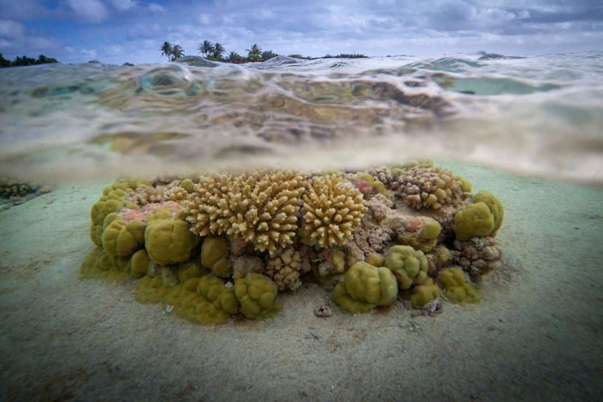This file photo shows coral reefs in the lagoon of the Toau atoll, about 400km from Tahiti in the Tuamotu Archipelago in French Polynesia, on Oct 18, 2015. Global leaders are convening at the United Nations headquarters to address problems facing the