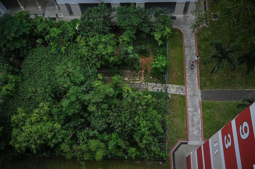 Mr Tan Thean Teng, who was the volunteer caretaker for the community garden at Block 938, Jurong West Street 91, for 14 years, has officially stopped his work there after the disagreement.