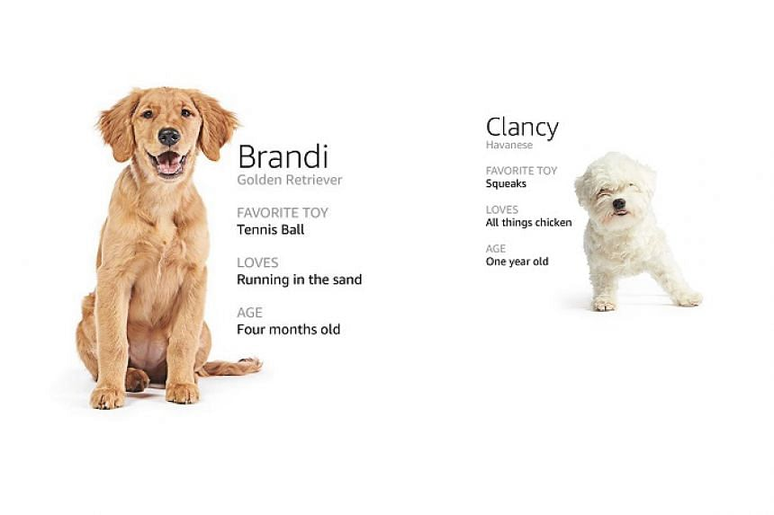 Two of the Amazon dogs winning hearts on the shopping site during its technical difficulties.