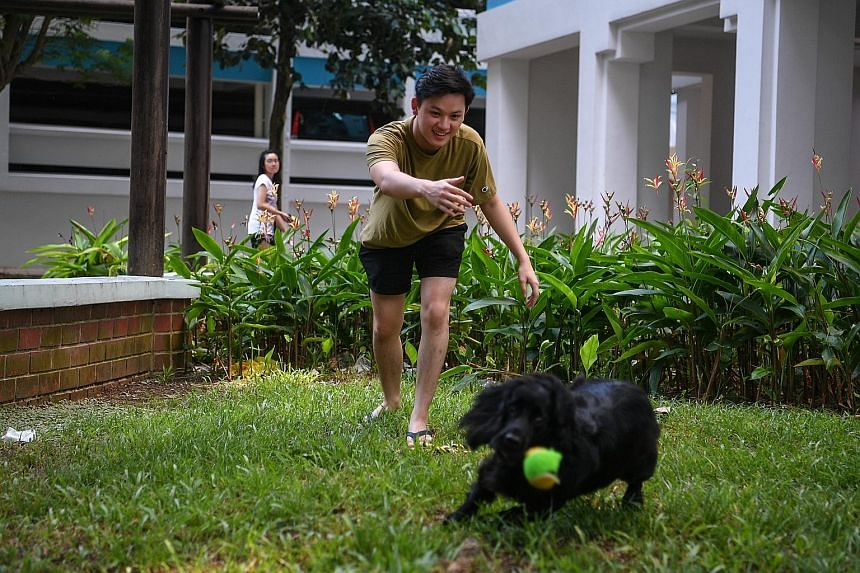 Mr Thaksin Toh, 21, having a ball with his former co-worker, Moss, yesterday. Mr Toh served NS as the cocker spaniel's handler. Now, the seven-year-old retired sniffer dog lives with Mr Toh in his Geylang Bahru flat.