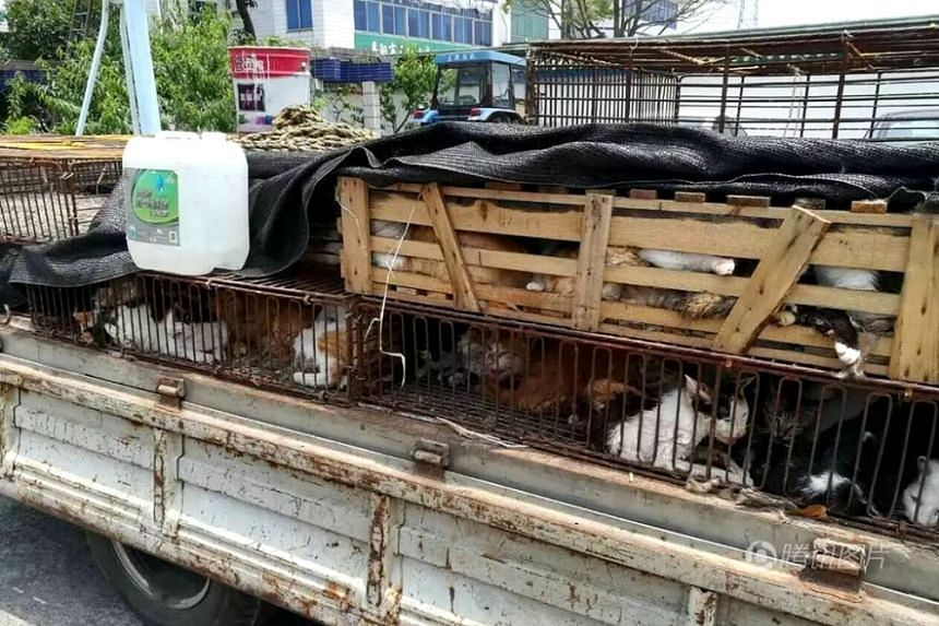 A man has been arrested for his involvement in capturing more than 500 cats to sell to restaurants in China. The animals were found crammed into cages.