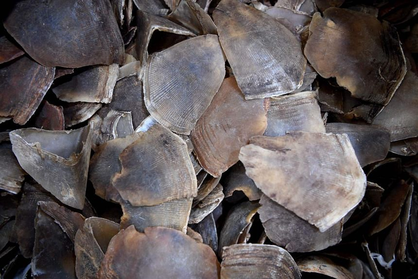 Malaysian customs officers have seized almost 300 kilograms of pangolin scales being smuggled through the main airport, officials said on June 13, 2017.