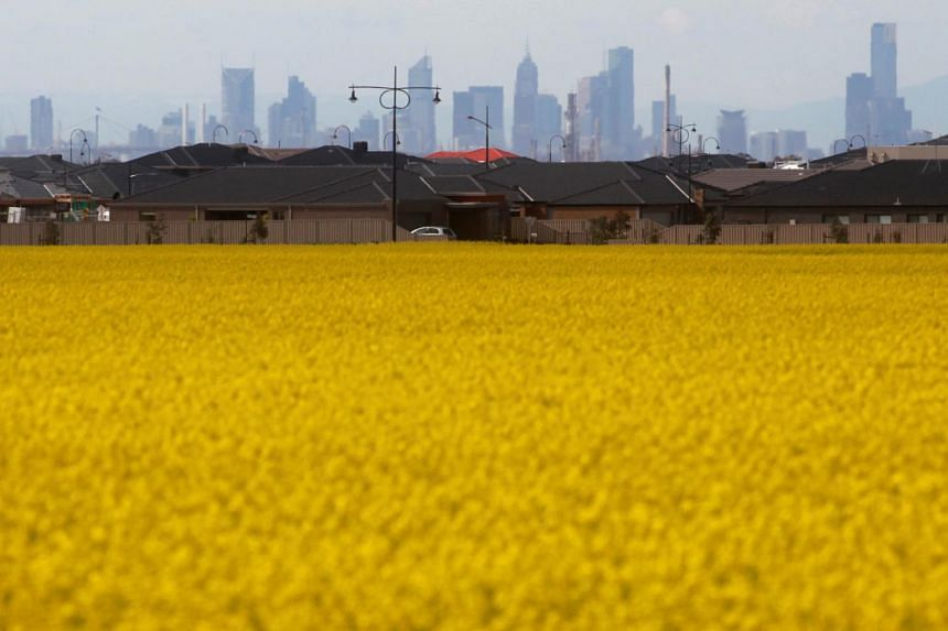 A canola field is seen near a new housing estate in Melbourne.
