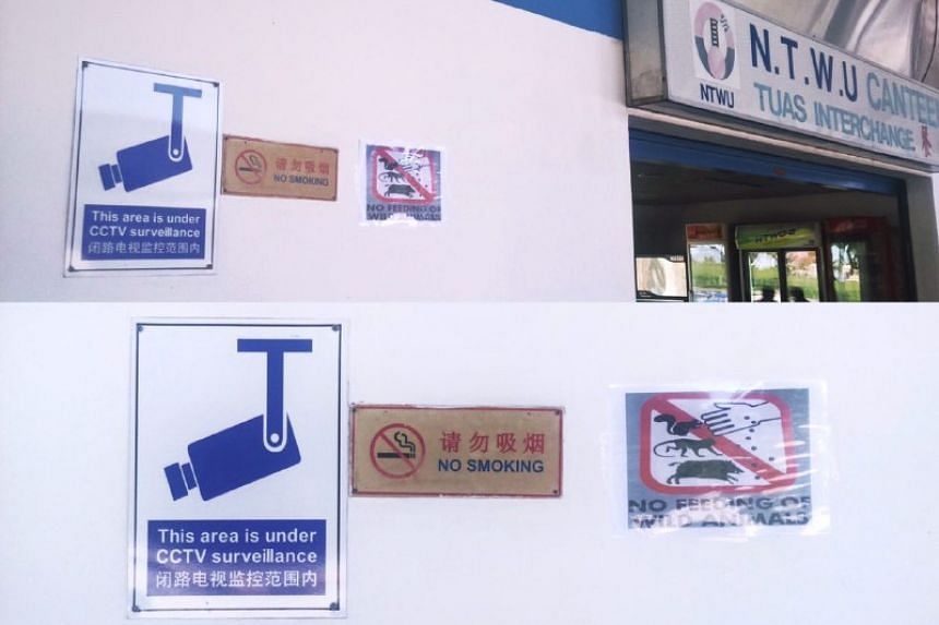 Staff from SBS Transit have put up posters on Thursday morning (June 15) warning people against feeding the creatures.