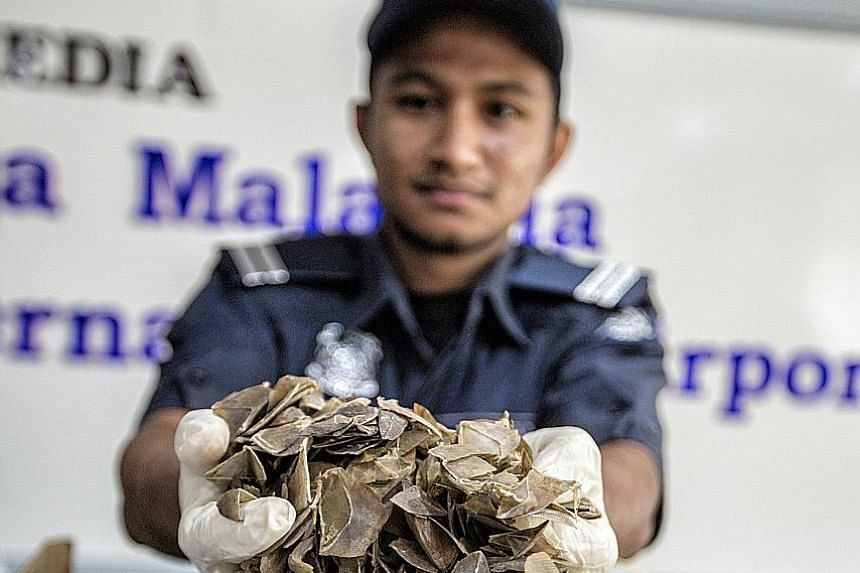 Left: Kuala Lumpur International Airport Customs officers found almost 400kg of smuggled pangolin scales yesterday. Above: On Wednesday, the Indonesian authorities seized hundreds of live pangolins and scales in a haul worth US$190,000.