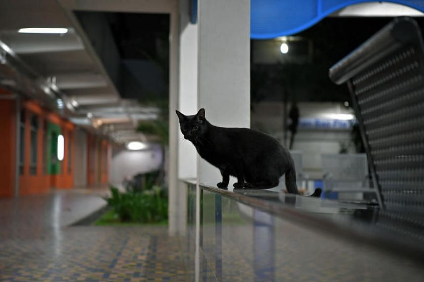 A stray cat at a void deck in Beach Road.